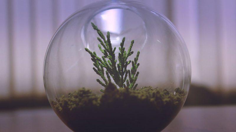 Zelfvoorzienende plant